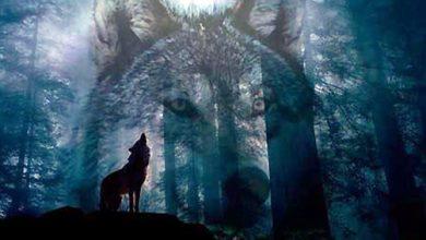Photo of الذئب في سلوم العرب
