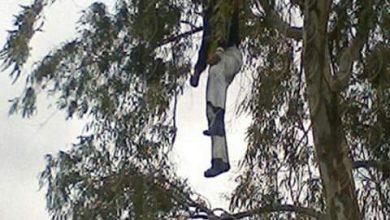 Photo of شخص ينهي حياته شنقا بشجرة في غابة السلوقية