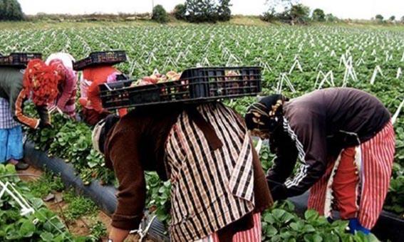 Photo of العاملات الفلاحيات : من الاقصاء الاجتماعي الى القهر الاقتصادي
