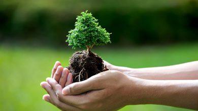 صورة حملة لغرس الأشجار بالمؤسسات التعليمية بإقليم برشيد