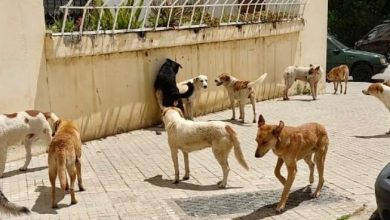 صورة سكان حي مسنانة بطنجة يشتكون من انتشار الكلاب الضالة وخطرها