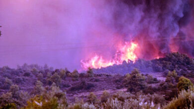 """صورة دار الشاوي"""" تفقد 60 هكتارا من ثروتها الغابوية بسبب حريق هائل"""
